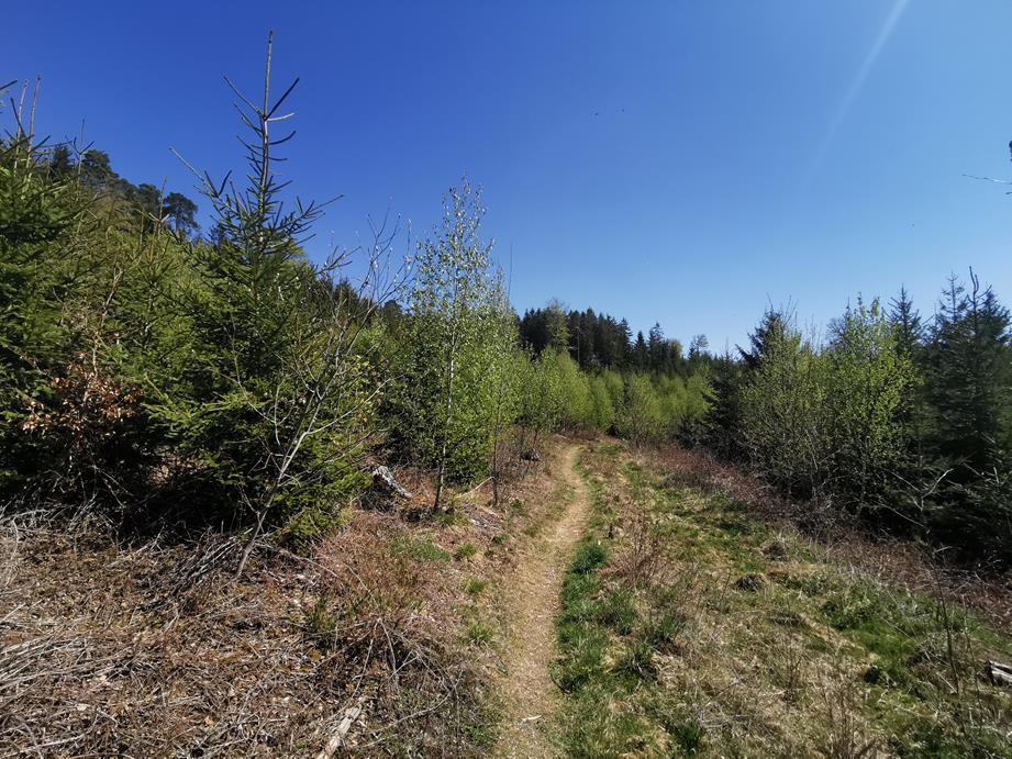 Trail nach dem 1. Aufstieg